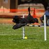 20130602dmkc-agility-01952