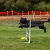 20130602dmkc-agility-01927