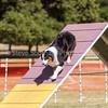 20130602dmkc-agility-03100