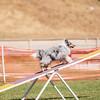 20130602dmkc-agility-03237