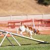 20130602dmkc-agility-03142