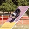 20130602dmkc-agility-03101