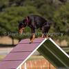 20130602dmkc-agility-03276