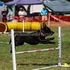 20130603dmkc-agility-01405