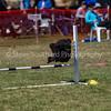 20130603dmkc-agility-01425