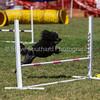 20130603dmkc-agility-01427