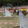 20130603dmkc-agility-02001
