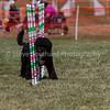 20130603dmkc-agility-01615