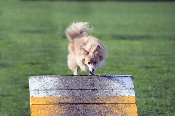 Dog Agility, Croydon, Rheneas