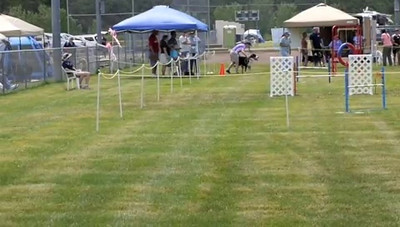 Linus running AKC FAST -- not too bad for only our 2nd attempt at this class together.