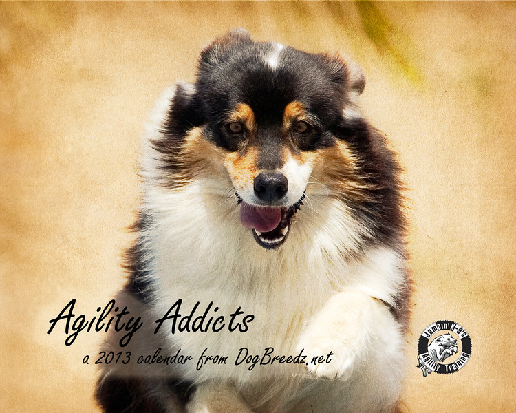 "Are you an agility addict?  Silly question, of COURSE you are!  Take a look at this year's edition of my <a href=""http://www.lulu.com/spotlight/dogbreedz"" target=""_blank"">Agility Addict wall calendar</a>."