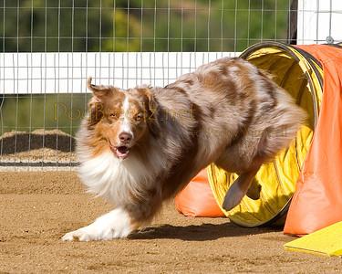 Jumpin' K9s ASCA - May 5, 2012