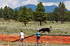 Linus happily overcoming his aversion to rubberized dog walks - yeah!  The back drop for the trial was the San Francisco peaks.
