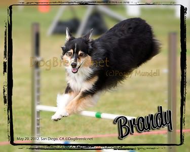 Performance Dog Training ASCA - May 20, 2012
