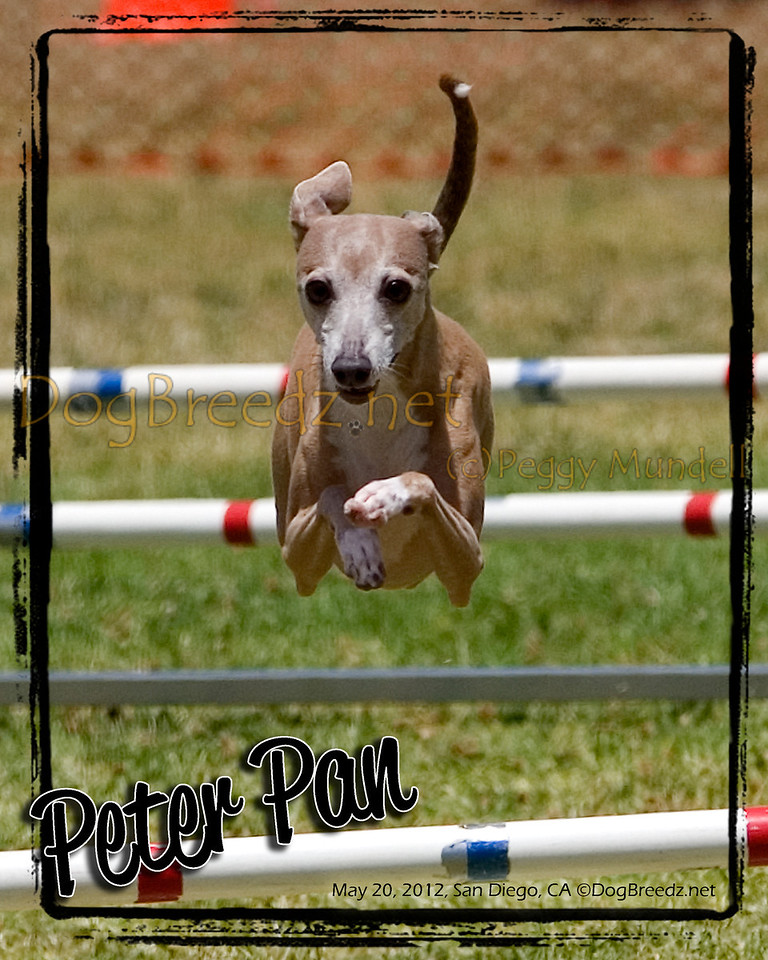 If you would like a favorite photo set in this custom template let me know - I'll design it up for you *prior* to your purchase.  Contact me through email at DogBreedz (at) yahoo (dot) com.  No charge for the design work - the final print is available in 8x10 and larger sizes (try the metallic finish for a great WOW factor!).