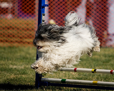 Performance Dog Training CPE - January 5, 2013