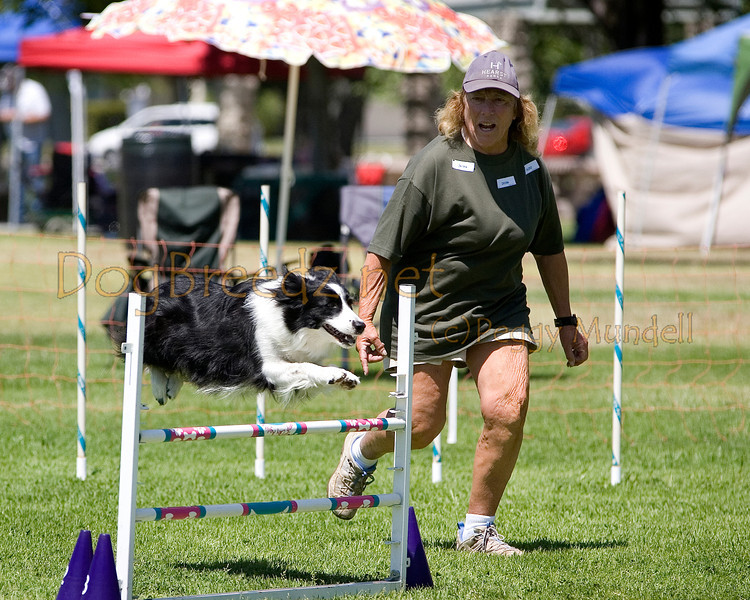 (Image #0259a) Border Collie #20106:  Risk. Simi Valley Kennel Club AKC Agility Trial May 19, 2013 in Camarillo, California. Standard Master/Excellent 20 inch.  Handled by Margie Hanlon.