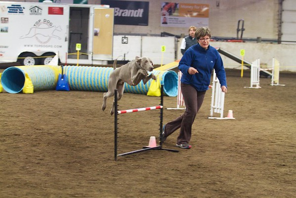 Top Dog - January 10-11, 2015