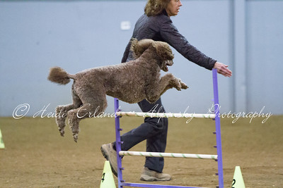 Top Dog - Jumpers L345C 10/20/13