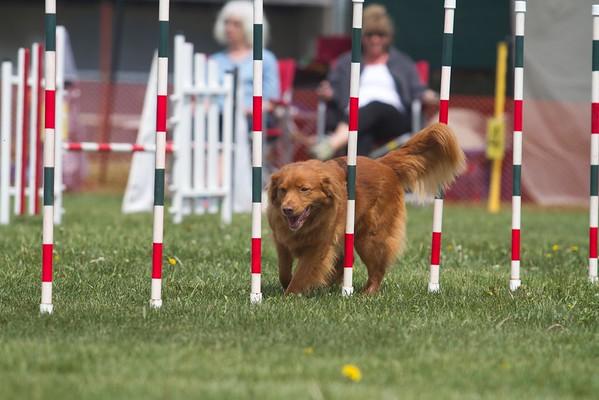 Top Dog - May 24, 2015