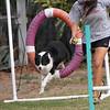 Tire swing.<br /> 11/11/09