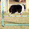 Go Daisy!<br /> 11/11/09