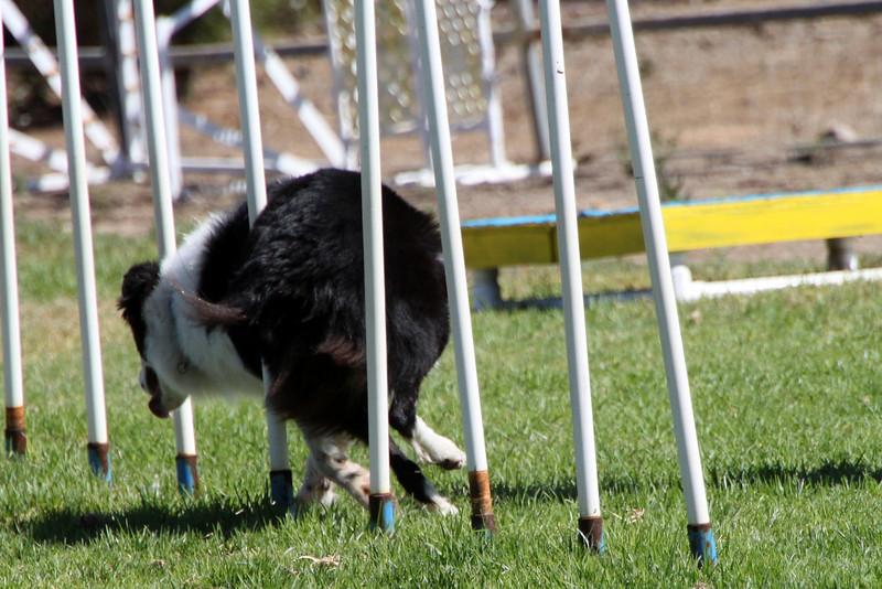 Look at Daisy's rear end levitating!<br /> October 2009