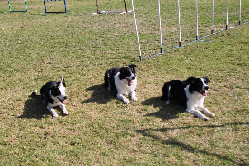 Juno, Daisy and Sprite.<br /> October 2009