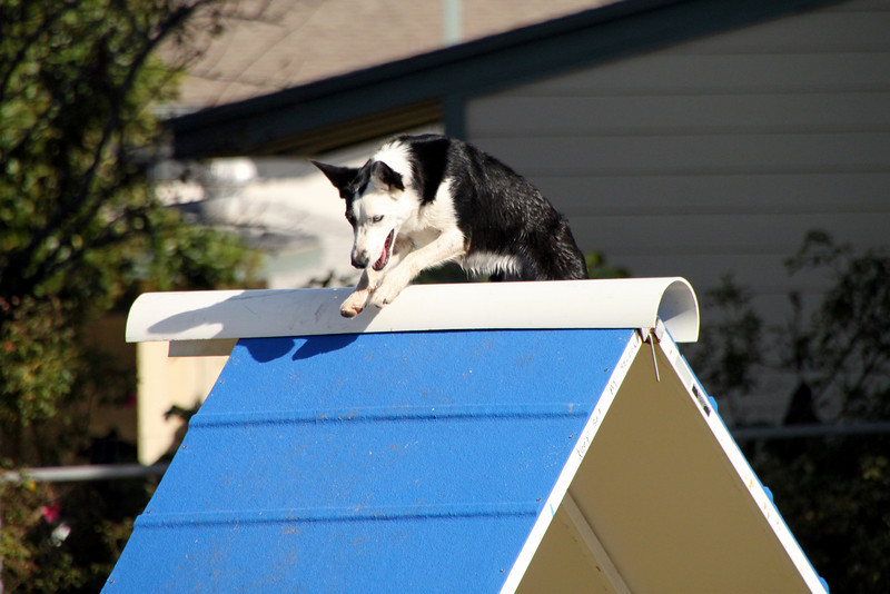 Juno is not afraid of heights!<br /> 10/21/09