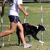 Shelly and Striker hit the first weaves.<br /> Bonita NADAC Trial<br /> Saturday, 10/03/09