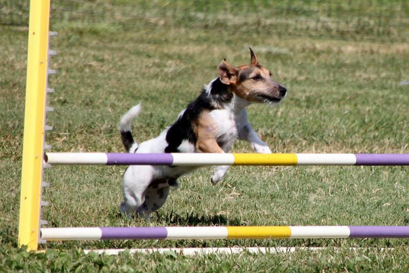 Go, Huckleberry!<br /> Bonita NADAC Trial<br /> Saturday, 10/03/09