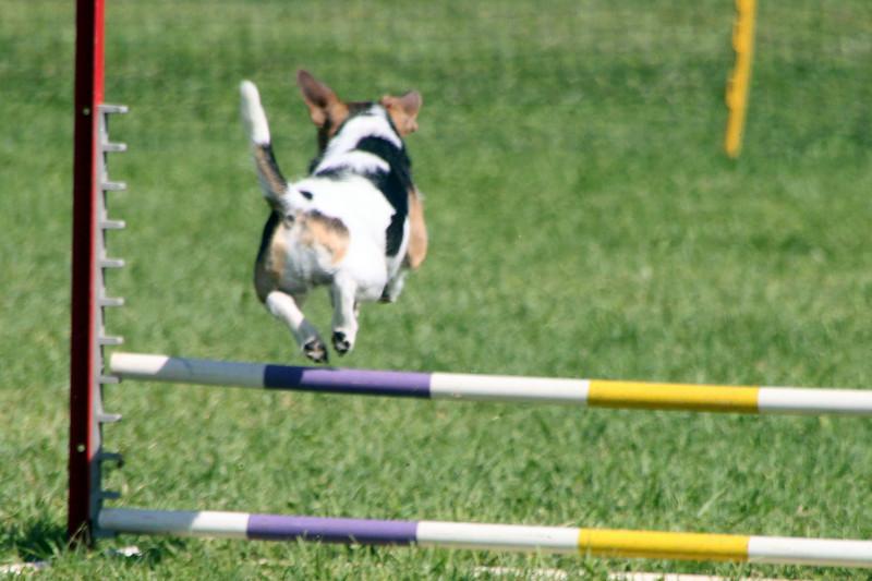 Up, up and away!<br /> Bonita NADAC Trial<br /> Saturday, 10/03/09