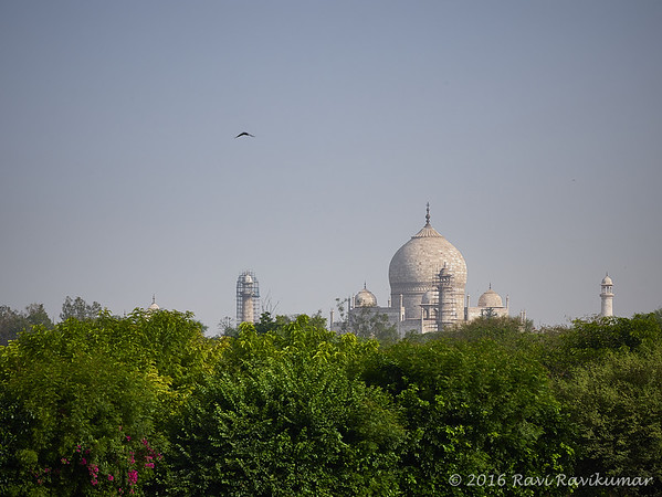 View of the Taj from Oberoi Amarvilas