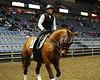 LI4_6007_Equine Extravaganza