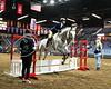 LI3_9530_Equine Extravaganza