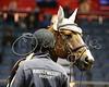 LI4_6002_Equine Extravaganza