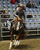 LI4_6006_Equine Extravaganza