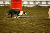 LI2_8914Stock Dogs_1st Rd