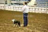 LI2_8905Stock Dogs_1st Rd