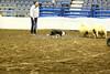 LI2_8916Stock Dogs_1st Rd