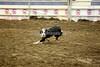 LI2_0024Stock Dogs_ 2nd Round