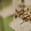 Greenpeace trackea el vuelo de miles de abejas para alertar de su desaparición