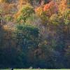Arthur Valley Autumn