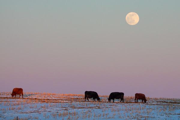 Under the Snow Moon