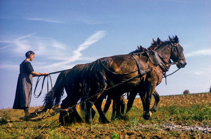 Amish Woman Plowing, Lancaster Co., Pennsylvania