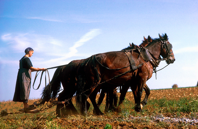 Amish Woman Plowing Field with Horses, Pennsylvania<br /> farming, agriculture, <br /> ER Degginger