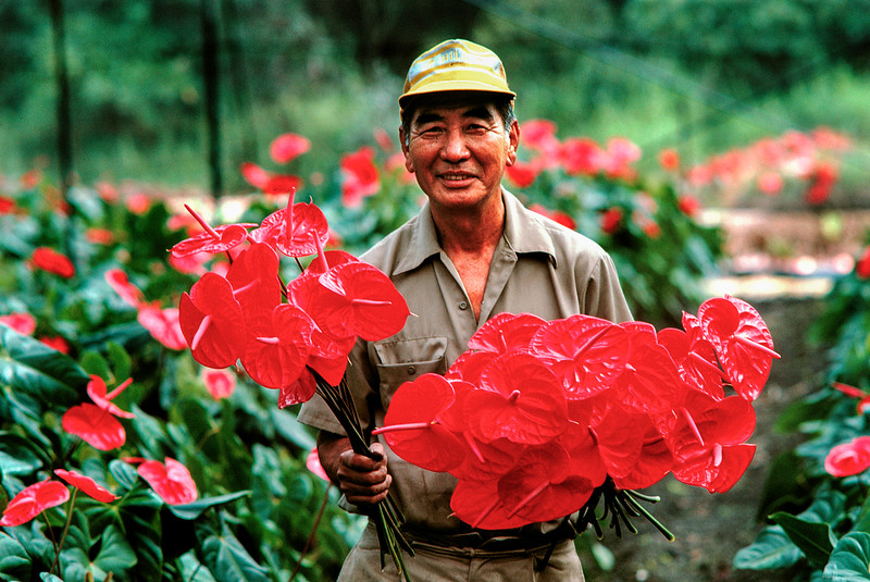 Anthurium Grower, Big Island of Hawaii<br /> flowers, commercial grower<br /> released!