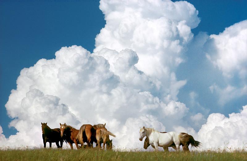 Dakota Pasture, Horses, thunderhead, clouds<br /> ER Degginger