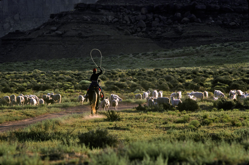 Sheep Herder, Monument Valley, Northern Arizona