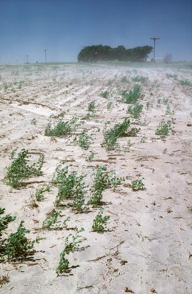 Dust Bowl, Wind Erosioding Topsoil